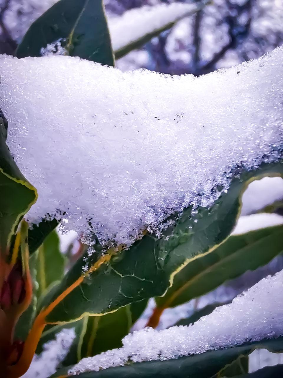 CLOSE-UP OF RAINDROPS ON SNOW