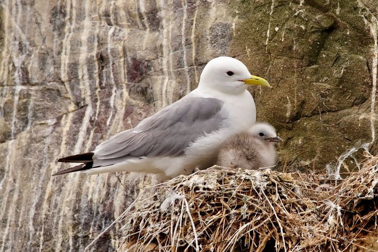 Close-up of seagull perching on nest