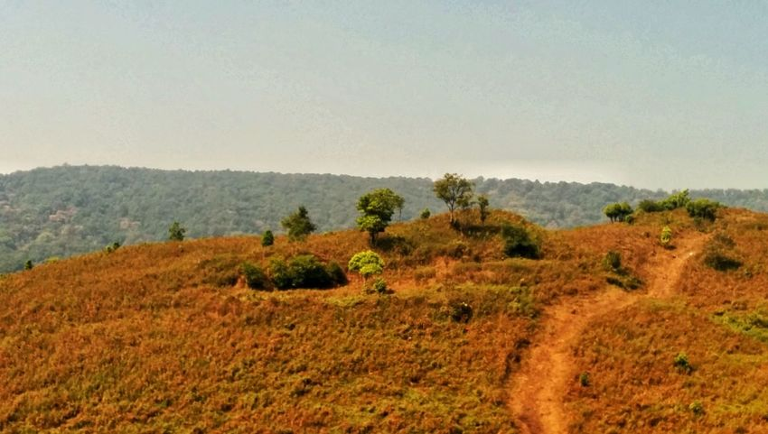 Karnataka Nexus 5 Beauty In Nature Nature Forest Landscape_photography Small Mountain