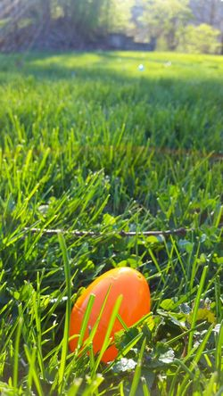 Easter Ready Easter Eggs Easter Egg Hunt Plastic Easter Eggs Ohio, USA