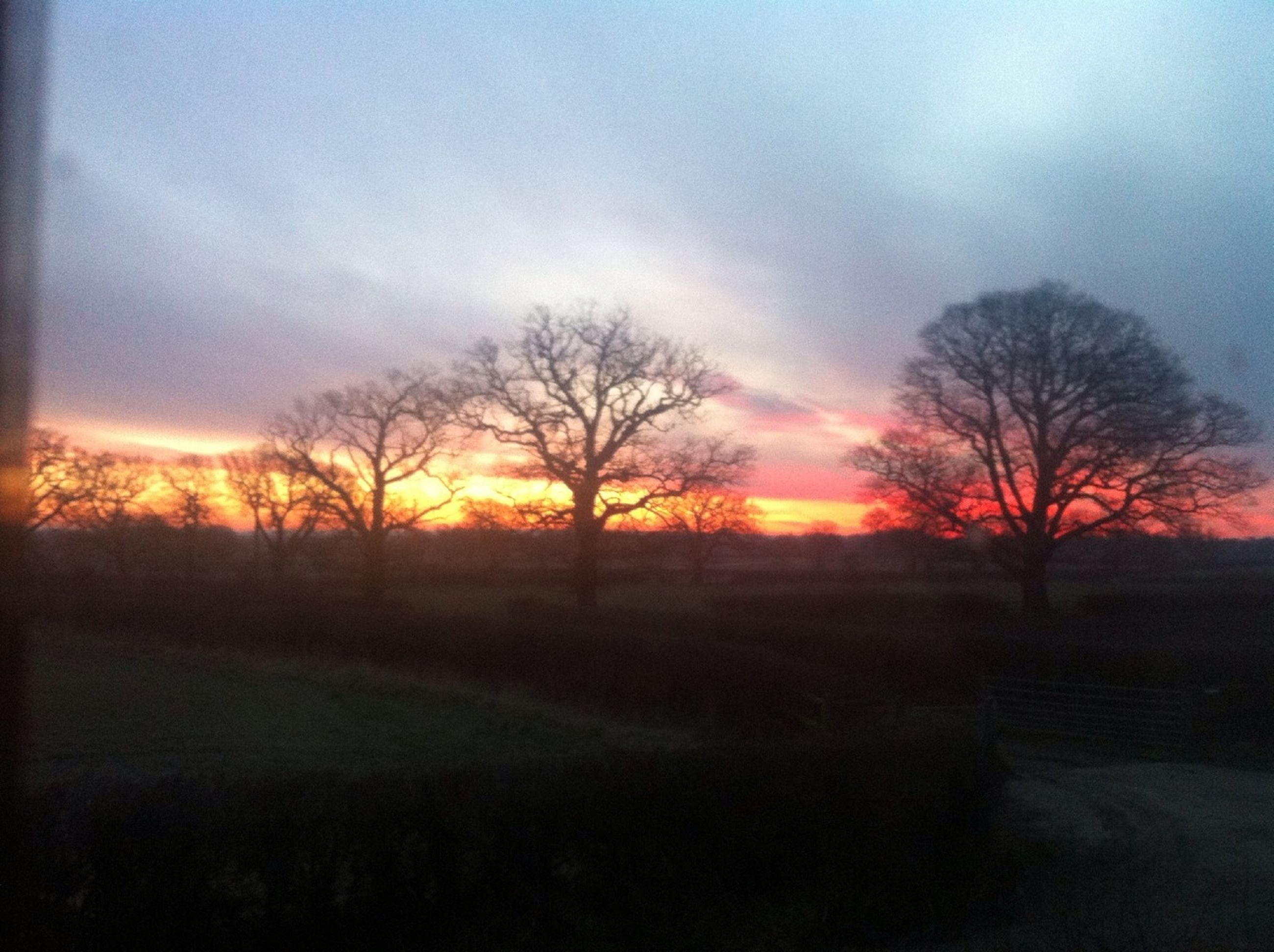 bare tree, sunset, silhouette, tree, tranquility, tranquil scene, sky, landscape, scenics, beauty in nature, branch, nature, field, cloud - sky, dusk, non-urban scene, idyllic, orange color, no people, outdoors