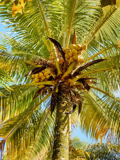 Tree Palm Tree Tree Trunk Sky Close-up Palm Frond Date Palm Tree Leaf Vein Egypt North Africa Leaves Palm Leaf Coconut Palm Tree Fallen Natural Pattern Change Fall Leaf Date Maple Leaf Frond Maple Grove Coconut Tropical Tree Branch