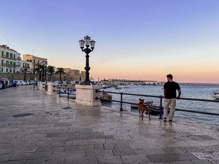 Dog on street against sky during sunset