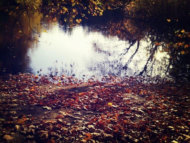 Crunchy leaves <3 Colors Of Autumn Goldener Oktober Indian Summer