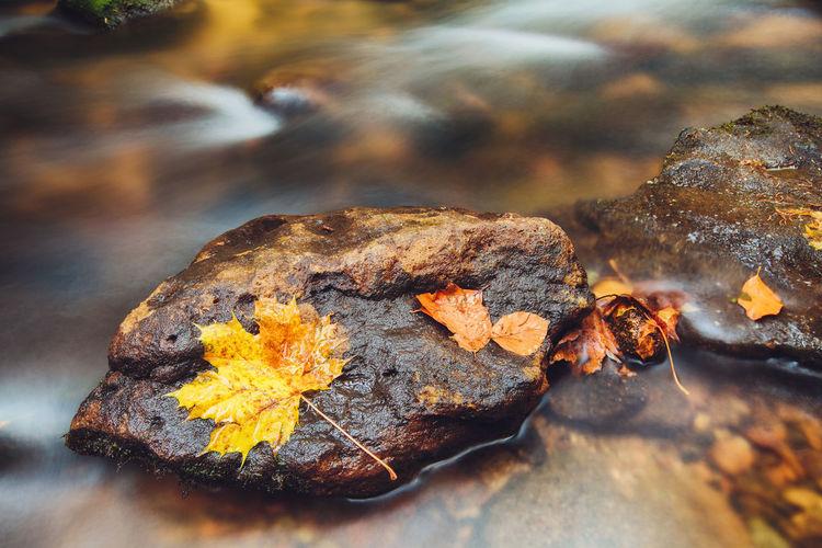 Close-up of autumn leaf on rock