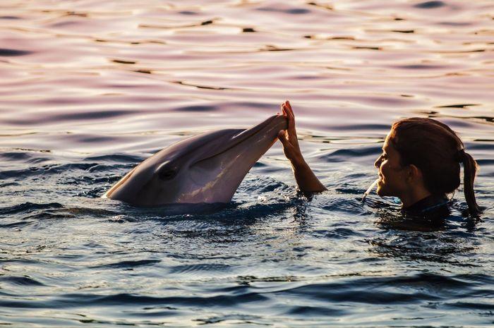 Bailando con....Delfines, Oceanográfico (Valencia - Spain) Water Travel Tourism Reflection Nature Swimming Beauty In Nature Dolphin Oceanographic Valencia, Spain SPAIN