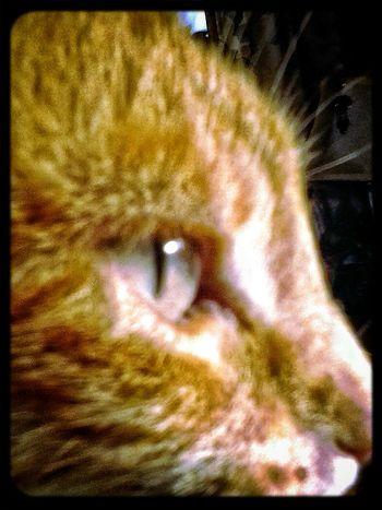 Catsoneyeem .. Profiling .