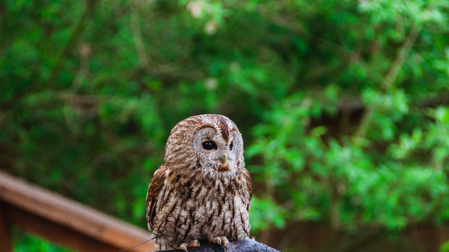 Close-up of owl perching against tree