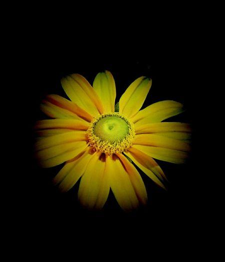 Flowers Light