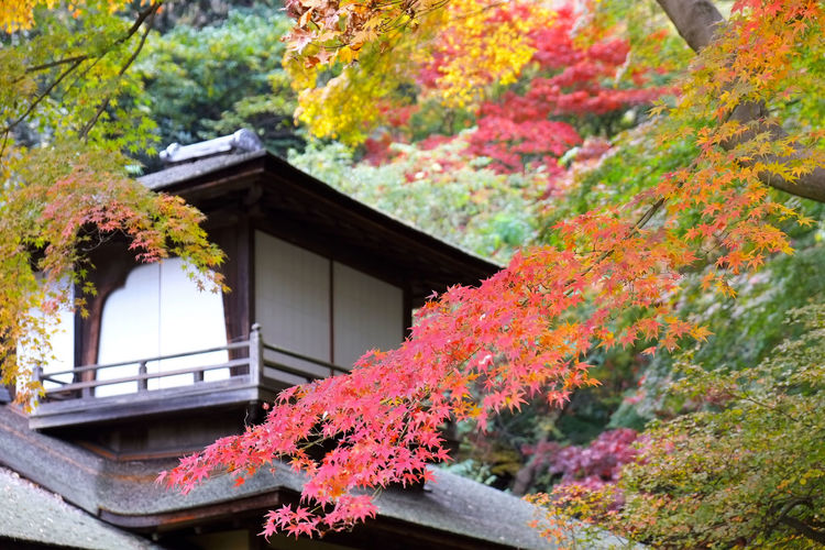 Autumnal tints Architecture Autumn Beauty In Nature Built Structure Nature No People Outdoors Styles In Japan Traditional Architectural Tree