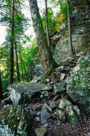 Fall Creek Falls State Park, Tennessee, United States. Hiking National Park Rails Steps Trees USA Day Fall Creek Falls Mountains Nature No People Outdoors Rocks Spencer State Park  Tenessee Tn Trail United States Of America Wooden