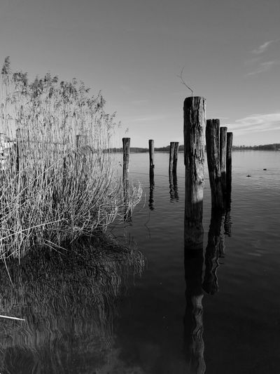 Wooden posts and reed in lake chiemsee against sky in black and white