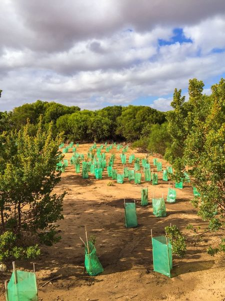 Helping Hand: Conservation Environment Environmental Conservation Helping Greenery Botanic Flora Green Western Australia Clouds And Sky Sky Trees Outdoors Nature Replenishment Plants Ecological Reserve Conservation Bush Replanting Coastal Landscape