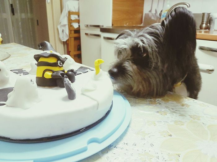 Dog Animals My Love Cake Minions Dolcetto Cane Curioso