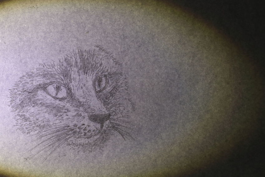 The face of cat wrote by pencil on white paper Textures Animal Animal Themes Cat Close-up Cute Day Diamond Eyes  Domestic Animals Domestic Cat Drawing Feline Fur Indoors  Lazy Animal Long Mustache Long Tail Mammal No People One Animal Paper Pets Portrait Texture Vignette