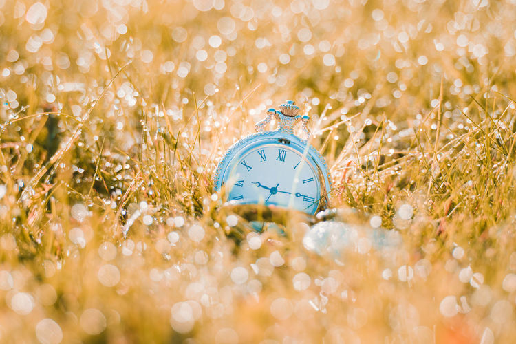 Close-up of pocket watch on wet grass