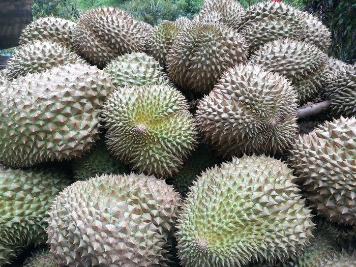 Durian Fruit Tree Close-up Fruits Eat Fresh market Green Thailand