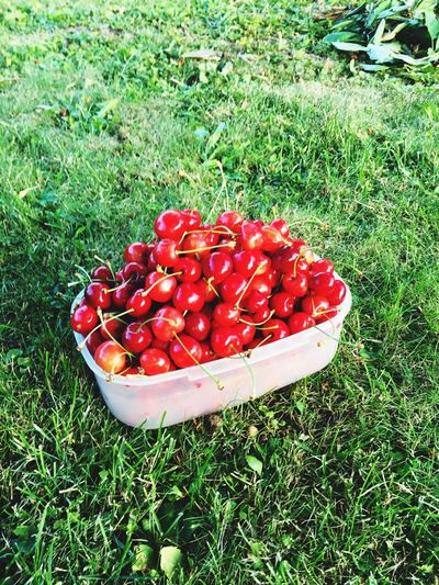 🍒 Cherries Grass Red Fruit Food And Drink Food Healthy Eating Field High Angle View Freshness Green Color No People Day Outdoors Nature Growth Close-up