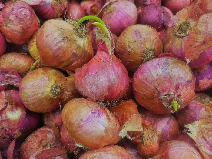 red onion Herb