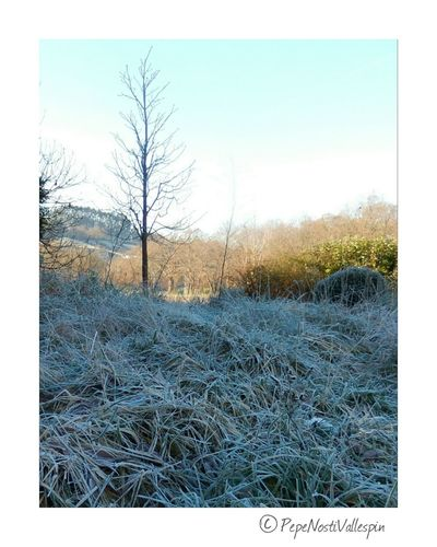 Iceandsun Poladesiero Outdoor Photography Frosty Nature Nature IceTime Naturephotography Pola De Siero Frozen Nature Beauty In Nature No People