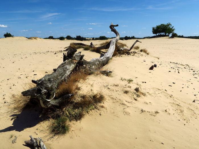 Dead tree on sand against sky