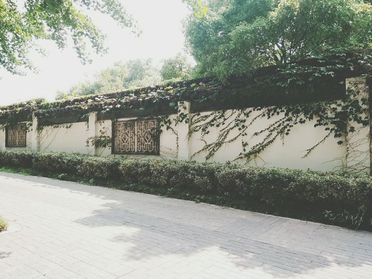 Suzhou Sunny Day Green Leaves🌿 Architecture Outdoors Day Sunlight Tree No People Sky Nature Water