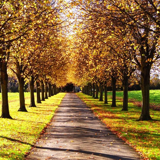 Happy Friday!!! Photography Change Autumn Trees The Way Forward Sunlight And Shadows Nature Beauty In Nature Diminishing Perspective Scenics Autumn