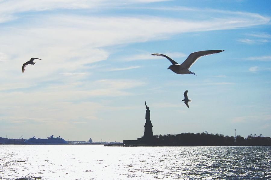 Flying Bird Animal Themes Mid-air Animals In The Wild Water Spread Wings Sea Nature Outdoors Space For Text No People City Architecture Statue Of Liberty NYC New York America Freedom Gulls Seagulls Copy Space Space For Copy Miles Away The City Light The City Light