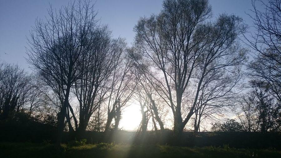 Sun shining through bare trees