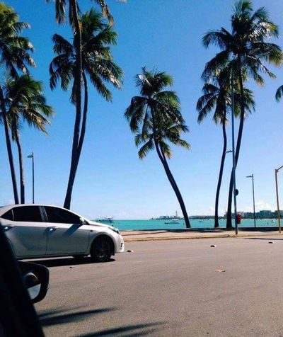 Beach Brazil Maceió Sea Sun Palm Tree Transportation Clear Sky