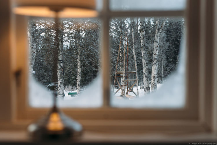 window winter view from cosy place Close-up Cold Temperature Cosy Day Fragility Indoors  Lamp Nature No People Snow Tree Window Winter