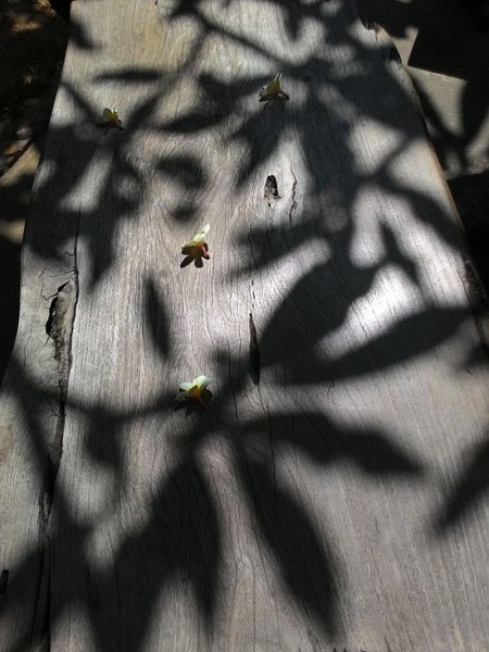 Light And Shadow Shadows & Lights Flowers Drops On The Wooden Chair Leaves Shadow