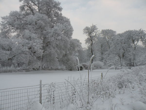 Tree No People Snow Nature Winter Outdoors Snowing Cold Temperature Sky Beauty In Nature Day Nature Tranquility Danmark Danish - in the Countryside of the island of Zealand in Denmark