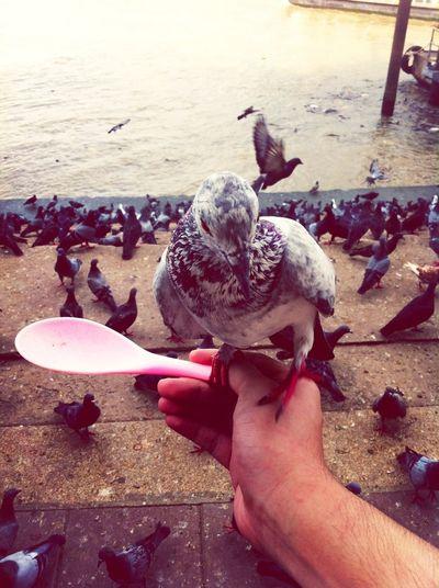 Indy Bird