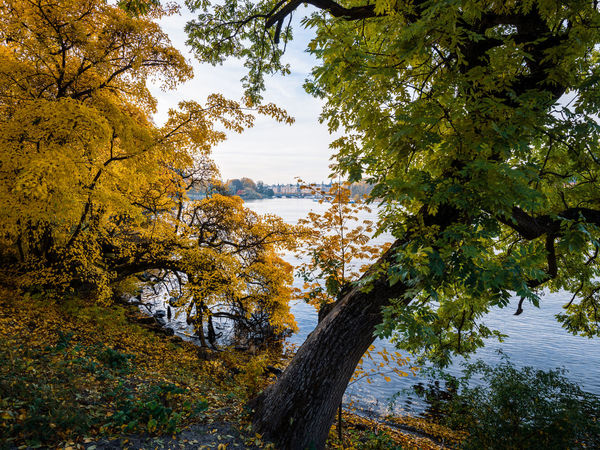 Tree Plant Autumn Change Nature Beauty In Nature Land Day Growth Tree Trunk Outdoors Fall Season  Foliage Djurgården Tranquility Water No People Tranquil Scene Scenics - Nature Branch Trunk Sky