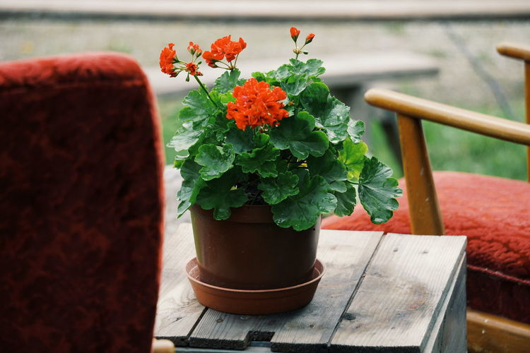 Close-up of flower pot on table outdoors
