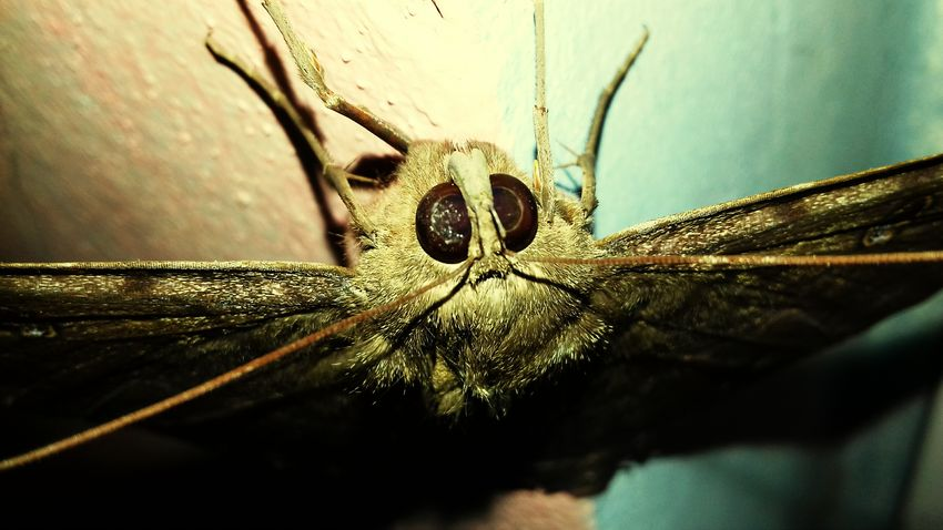 Close-up Animals In The Wild Animal Themes Insect Butterfly - Insect Brazil