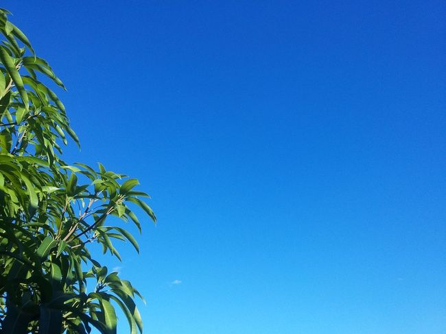 A tropical back🍃 Blue Copy Space Outdoors Sky Growth No People Tree Beauty In Nature Plant Close-up Low Angle View Clear Sky Nature Day