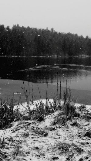 Water Lake Tranquil Scene Scenics Beauty In Nature Nature Outdoors Winter Snow Loons Loon
