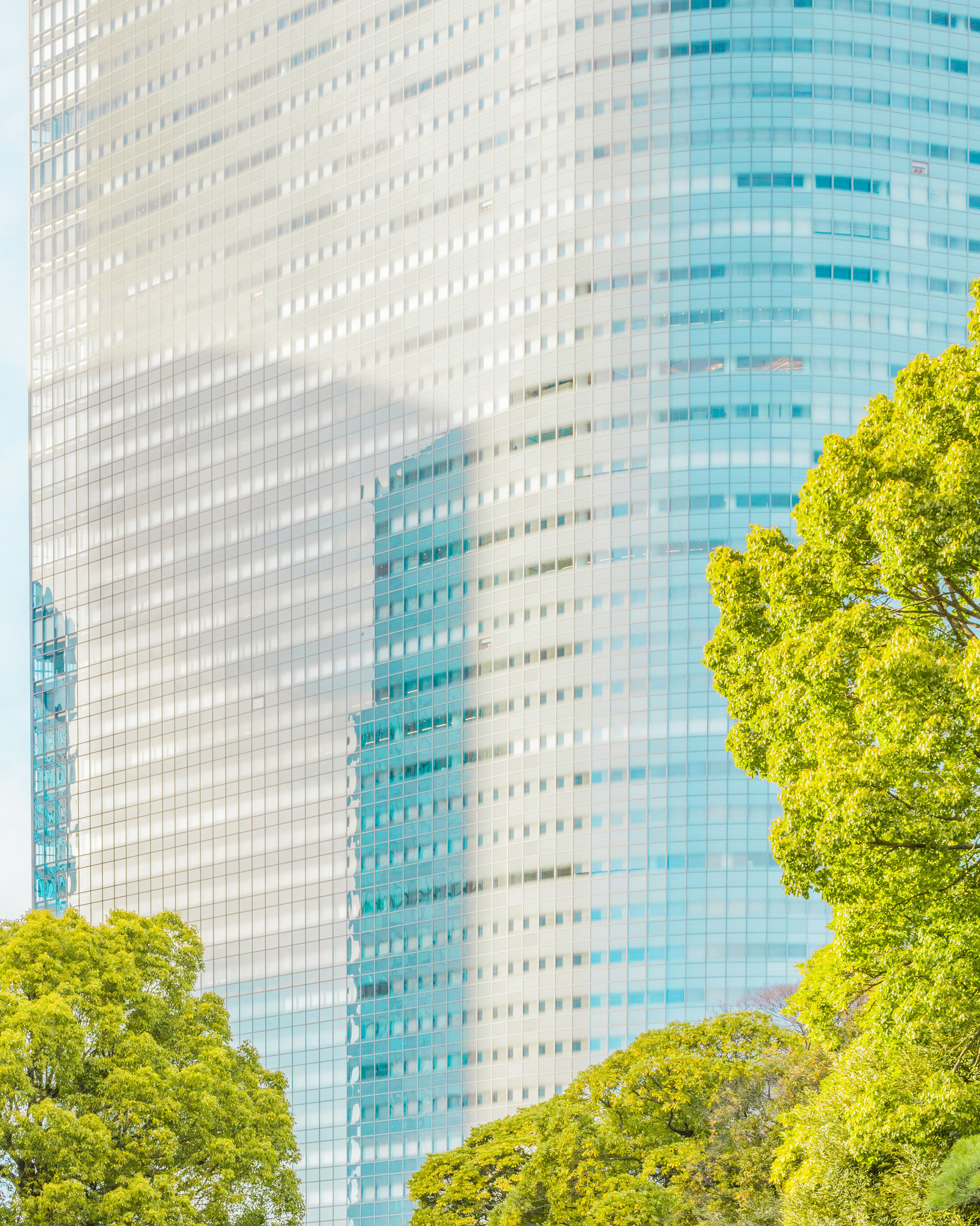tree, window, skyscraper, architecture, city, day, low angle view, built structure, building exterior, outdoors, green color, growth, no people, modern, cityscape, sky, close-up