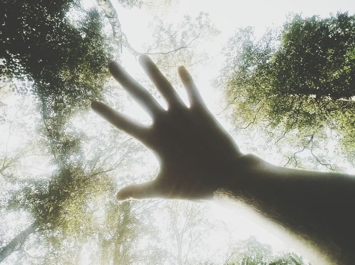 My hand Wood The Illuminator - 2014 EyeEm Awards Mission Mystery