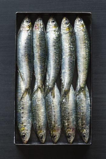 Fresh Whole Sardines Packed Tightly Together Facing Opposite Sides in a Metal Box on a Black Background Box HEAD Packed Like Sardines Raw Black Close Conceptual Fish Fishes Flat Lay Food Metal Nobody Packed Portuguese Food Raw Fish Sardine Sardines Seafood Silver  Sustainable Together Top Down Uncooked Whole