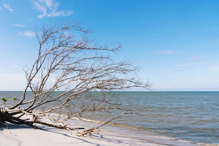 Sea Horizon Over Water Nature Tranquility No People Outdoors Sky Beauty In Nature Water Day Scenics Beach Close-up