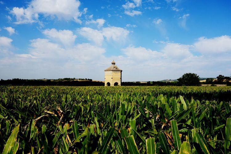 France Dovecote Landscape_Collection