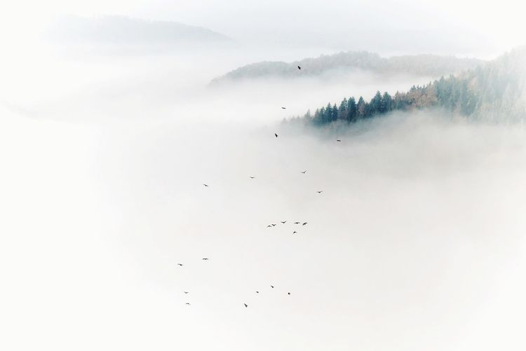 Birds in fog Flying Outdoors Fog No People Nature Scenics Bird Beauty In Nature Animal Themes EyeEm Nature Lover Foggy Morning Power In Nature Nature Photography Landscape_Collection Scenery Moody Landscape Lost In The Landscape Perspectives On Nature Flock Of Birds Tranquility Mountain Large Group Of Animals Tranquil Scene Day Sky Togetherness