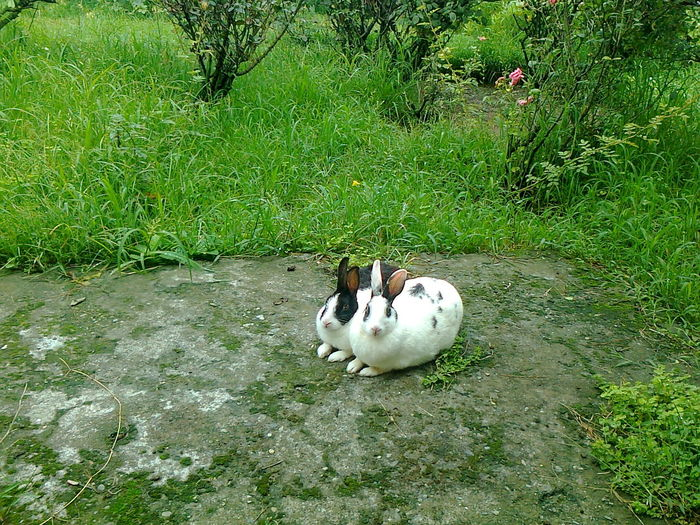 Animal Themes Beauty In Nature Black And White Rabbits Day Green Color Mammal Nature Outdoors
