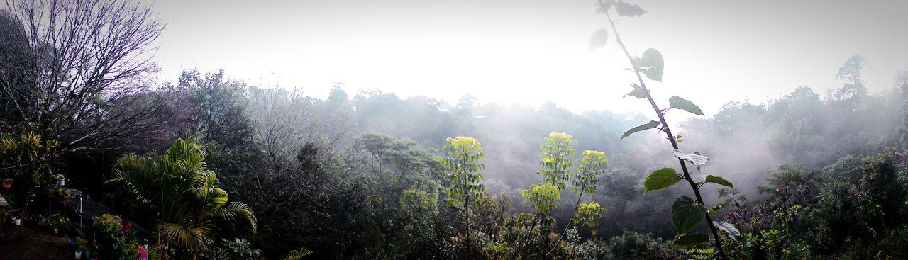 Briones  Nature Garden Ecologic
