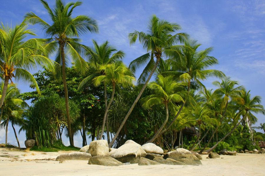 A palm lined beach on Santosa island in Singapore ASIA Travel Photography Tropical Paradise Beach Beauty In Nature Blue Day Nature No People Outdoors Palm Tree Sand Santosa Island Scenics Sea Sky Tourist Destination Tranquil Scene Tranquility Travel Destinations Tree Water