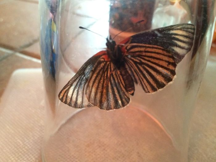 High angle view of butterfly on glass