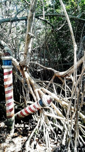 Overtaking roots Viscaya Built Structure No People Stripes Red And White Gondola Post Fig Tree Roots